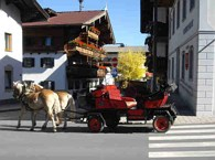 Horse-drawn carriage rides Achlhof