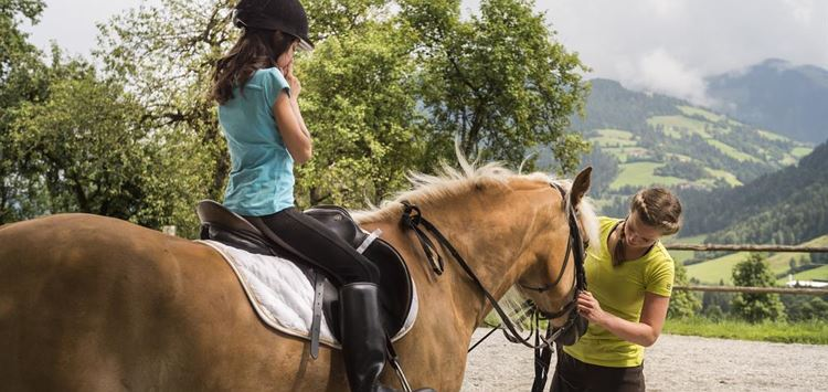 Spend a morning with horses at the Achlhof farm