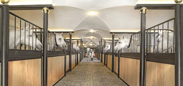Lipizzaner stock guided tour at Stanglwirt