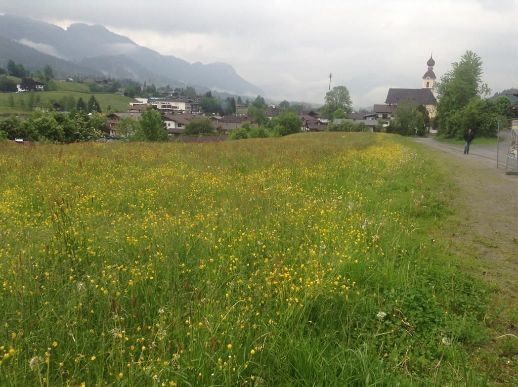 Wildflowers in front of the Kaiserchalet
