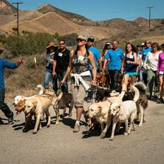Hundecoach Hedi in Los Angeles beim Pack Walk