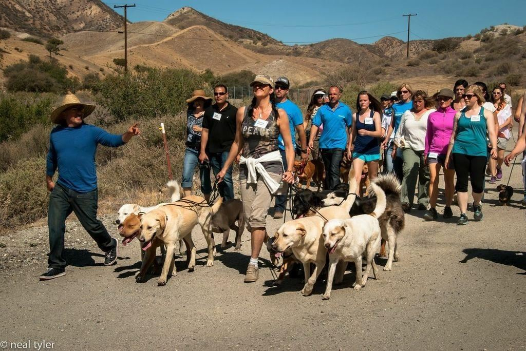 Hundeocach Hedi beim Pack Walk in Los Angeles