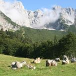 Guided hikes around Ellmau