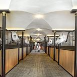 Guided tour of the Lipizzaner stud farm