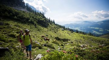 A hike across the Alpine pastures